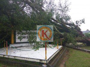 Pohon beringin berusia puluhan tahun tumbang dan menghantam salah satu bagian Markas Kipan C 713, Senin (6/1).