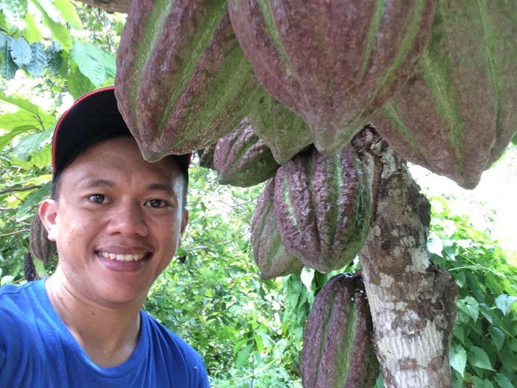 Tak Mudah Perawatannya, Kakao Tetap Unggulan di Upai Berita Daerah Berita Kotamobagu