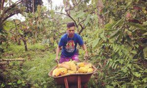 Daerah Kotamobagu  Upai Rensa Bambuena Potensi Perkebunan Kotamobagu Kakao