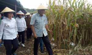 Pemkab Bolmong Akan Sekolahkan Petani Berita Bolmong