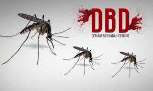 Angka Penderita DBD di Bolmong Menurun Berita Bolmong