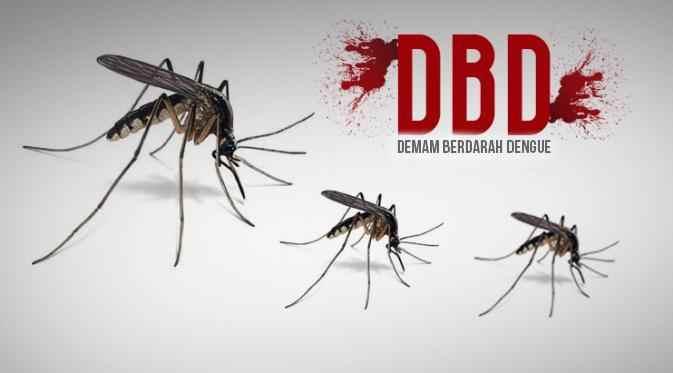 41 Hari, 50 Kasus DBD di Kotamobagu Berita Kotamobagu