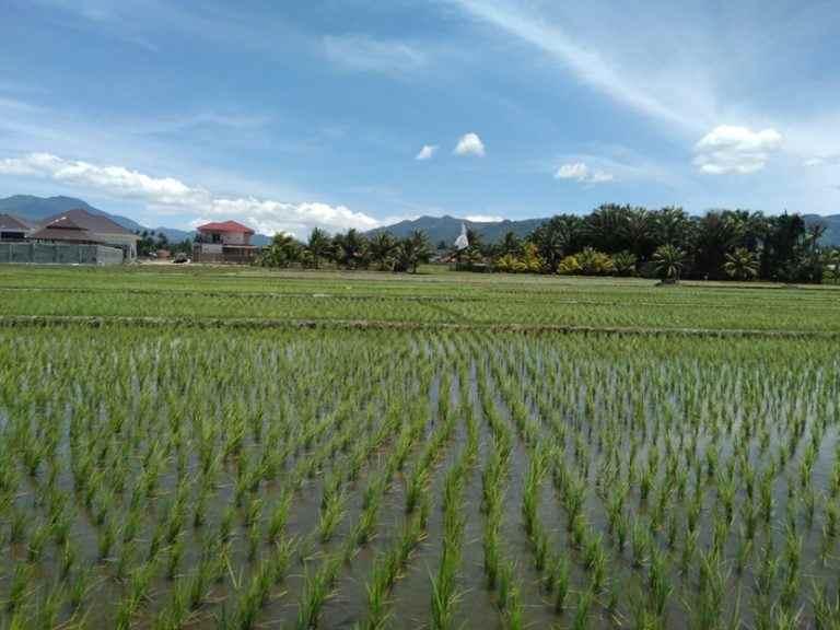 Kawasan Pertanian Motcil Mulai Beralih Status Berita Kotamobagu
