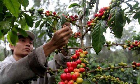 Pastikan Lahan Produksi Tak Rusak Lingkungan, Perhutani Gandeng BNPB Berita Ekonomi