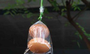 Meski Gratis, Akseptor Vasektomi di Bolmong Masih Kurang Berita Bolmong