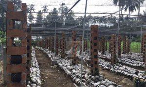 Nilai Jual Tinggi, Petani Mulai Kembangkan Vanili di Poyowa Besar Berita Kotamobagu