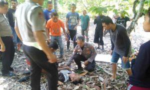 Terjadi di Passi II, Warga Bigo Coba Bunuh Diri dengan Jatuhkan Diri dari Pohon Kelapa Berita Hukum