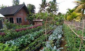 DPKP Ajak Masyarakat Bolsel Manfaatkan Lahan Pertanian dengan Rajin Menanam Berita Bolsel Berita Daerah Berita Nasional Sulut